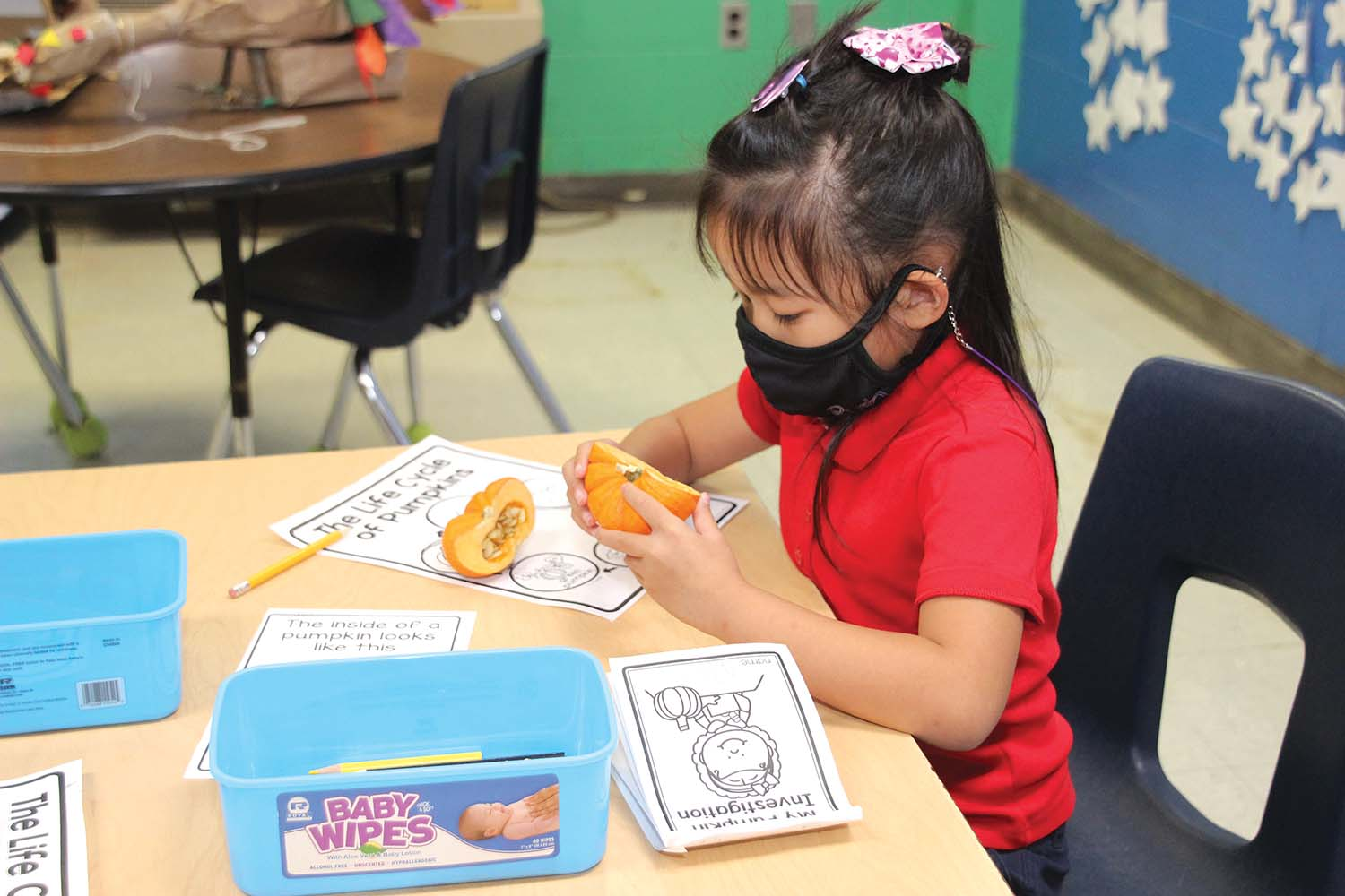 Mia Le, a kindergartener in Beth Lang's class, investigates the inside of a pumpkin as compared to the resources given during this week's Science rotation. Paula Berryhill is the Science Lab instructor.